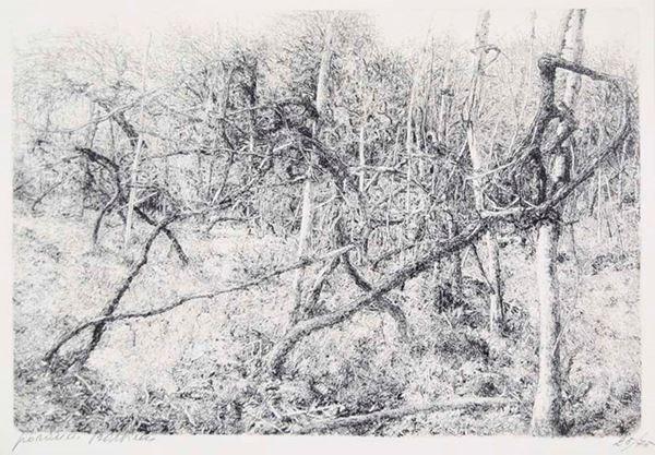 GIOVANNI BARBISAN - L'orto 1979