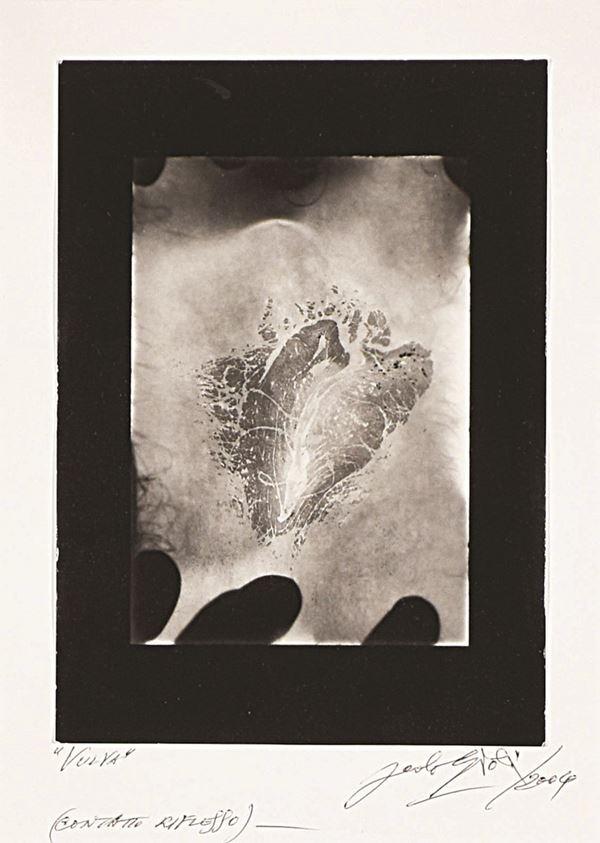 PAOLO GIOLI - Vulva (contatto riflesso)