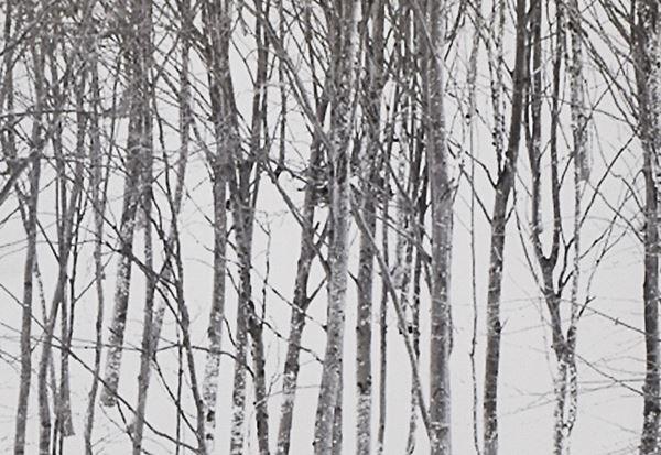 ABBAS GHARIB - Snow white photo collection